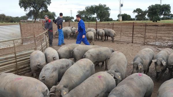 Diputación de Badajoz y el IES Nuestra Señora de Bótoa renuevan convenio para prácticas en 'La Cocosa'