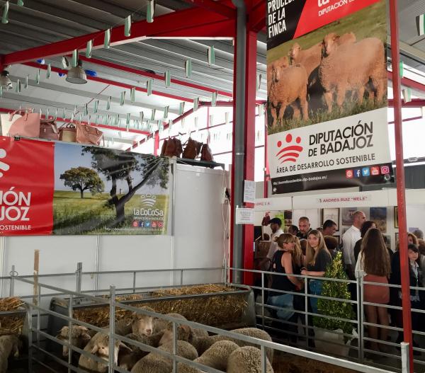 Diputación de Badajoz subasta 16 cabezas de ganado en la XXI Feria de La Coronada