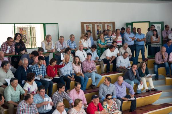 Diputación de Badajoz ha participado en la subasta de ovinos de raza merina de la Feria Internacional Ganadera de Zafra
