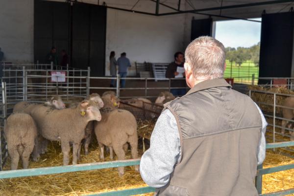 Buena acogida en la subasta anual de ganado de la Finca La Cocosa