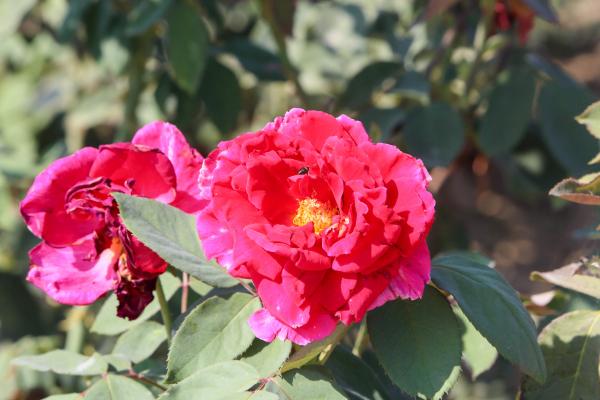El vivero provincial de la Diputación de Badajoz ha suministrado plantas florales a 125 municipios de la provincia