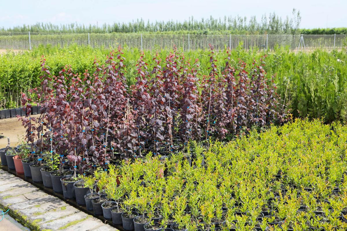 Comienza la campaña de suministro de plantas a Ayuntamientos por parte del Vivero Provincial