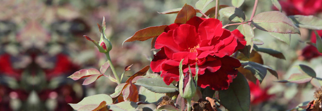 Comienza la campaña de suministro de plantas en flor a Ayuntamientos por parte del Vivero Provincial