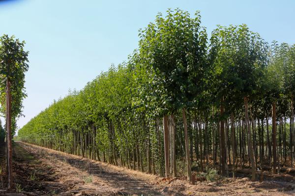 El Vivero Provincial de la Diputación de Badajoz ha suministrado plantas a 160 municipios de la provincia