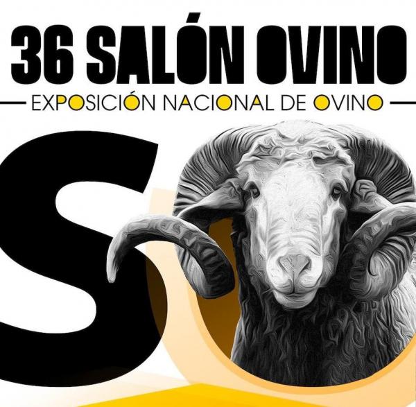 La Diputación de Badajoz ha participado en la subasta nacional de raza merina de la 36 edición del Salón Ovino de Castuera